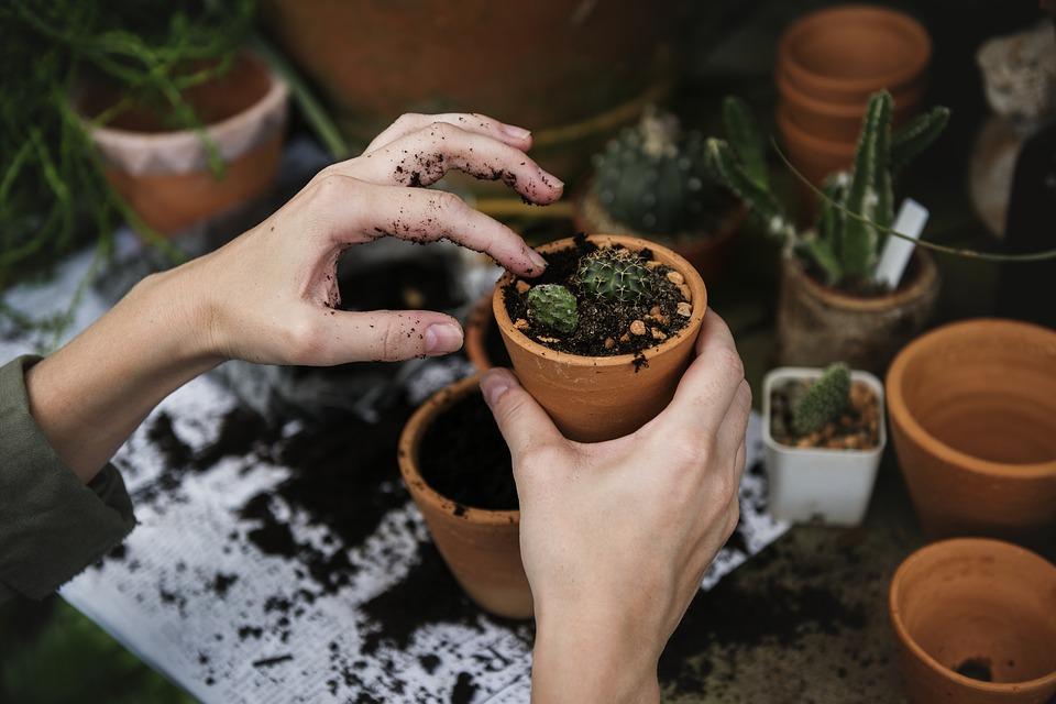 Que faut-il pour créer un jardin ?