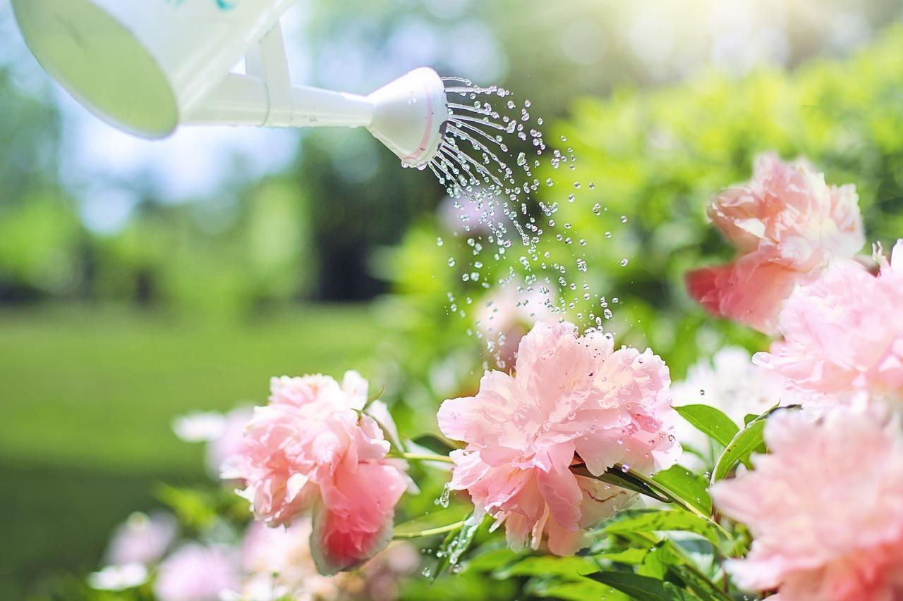 Quels types de fleurs pour un jardin en zone urbaine ?